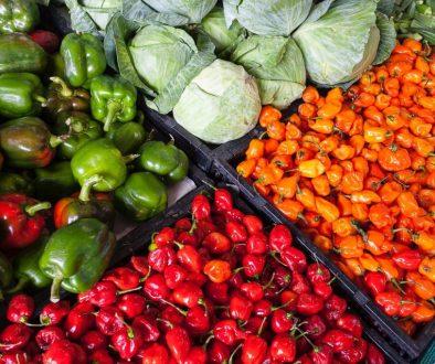 abundance-agriculture-cabbage